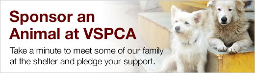 Sponsor an animal at VSPCA